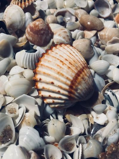 Need vitamin sea Shell No People Animal Shell Animal Wildlife Close-up Animal Food High Angle View Animal Themes Day Still Life Choice Backgrounds Abundance Large Group Of Objects Food And Drink Seashell Full Frame Natural Pattern Nature