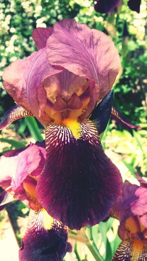 Iris Flower Spring Bluming Enjoying Life Flowers #цветы #photo #фото Grass Flowers Nature