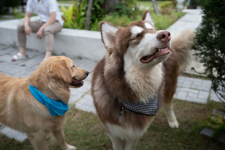 two dog