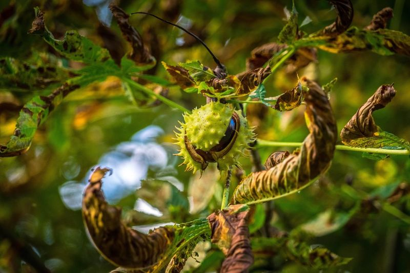 Bursting Growth Fruit Focus On Foreground Tree Close-up Nature Plant No People Outdoors Branch Day Animal Themes Food Freshness Beauty In Nature Autumn Fall