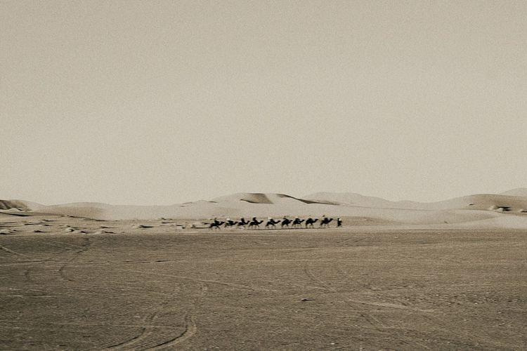 Camels Walking In Scenic Desert Against Sky