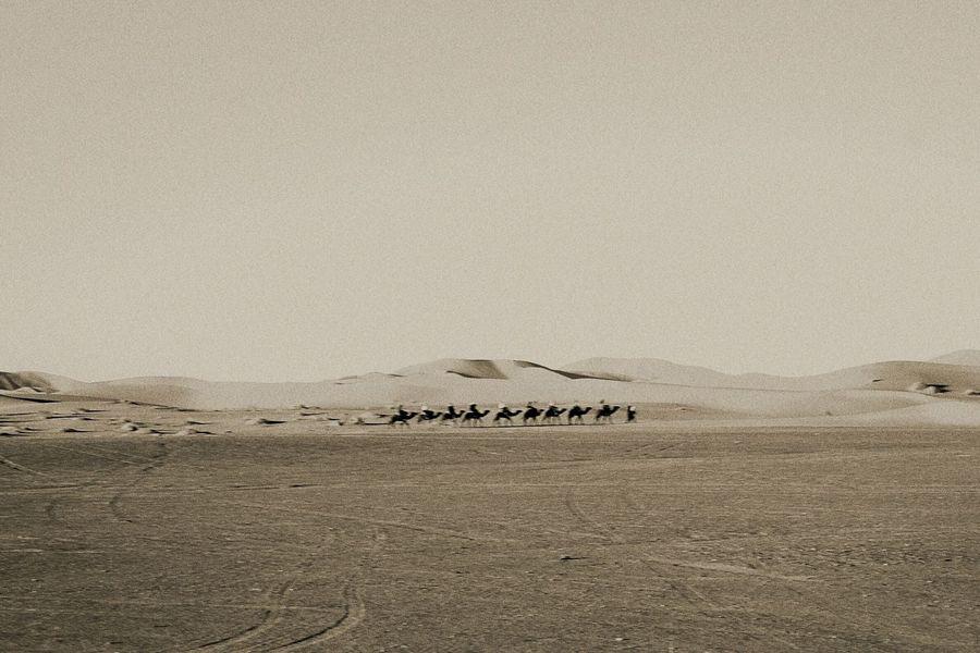 EyeEm Selects Bird Desert Sky Landscape Sand Dune Animal Track Camel EyeEmNewHere A New Beginning
