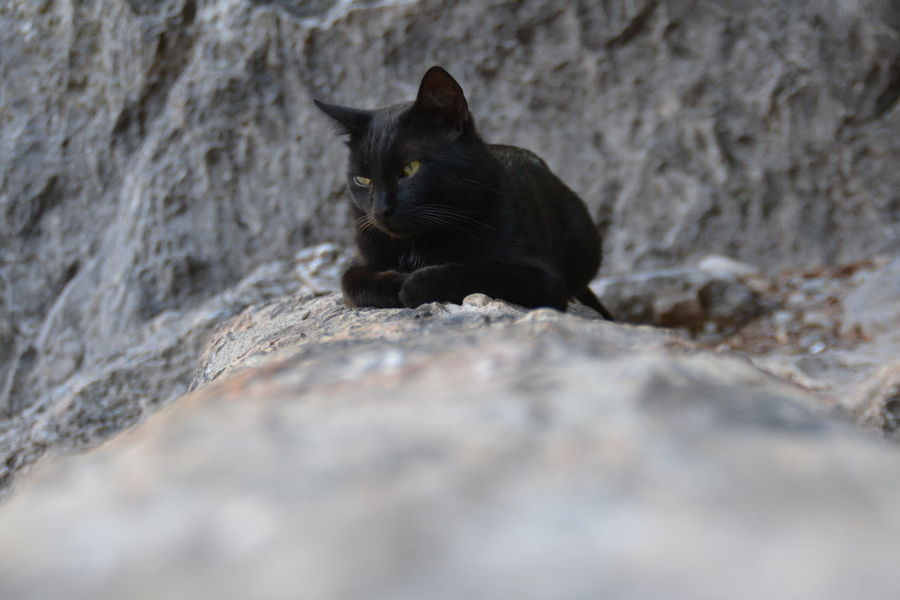 Black Color One Animal Domestic Animals Rock - Object Animals In The Wild Suspicious Suspicious Cat