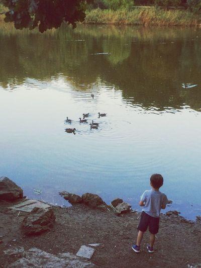 Water Lake Bird