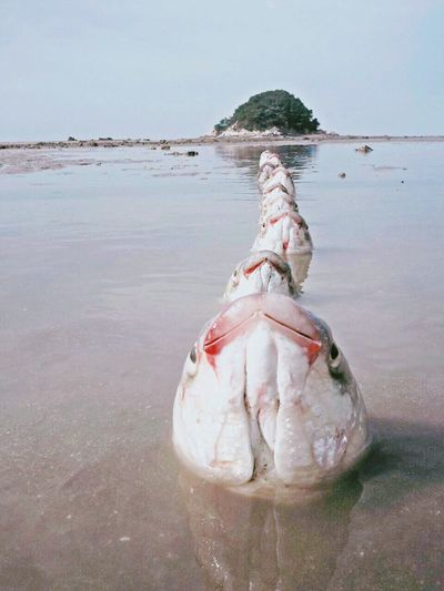 Water Fish Fishing Mullet Sea Train No Composite Fish Train. No Composite EyeEmNewHere