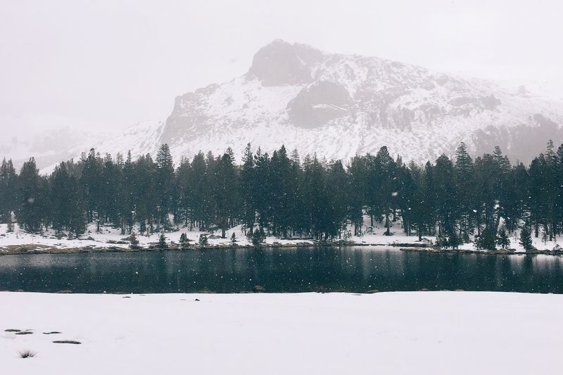 California Day Lake Mountain Mt. Dana Nature No People Outdoors Scenics Snow Tree Water Winter Yosemite National Park