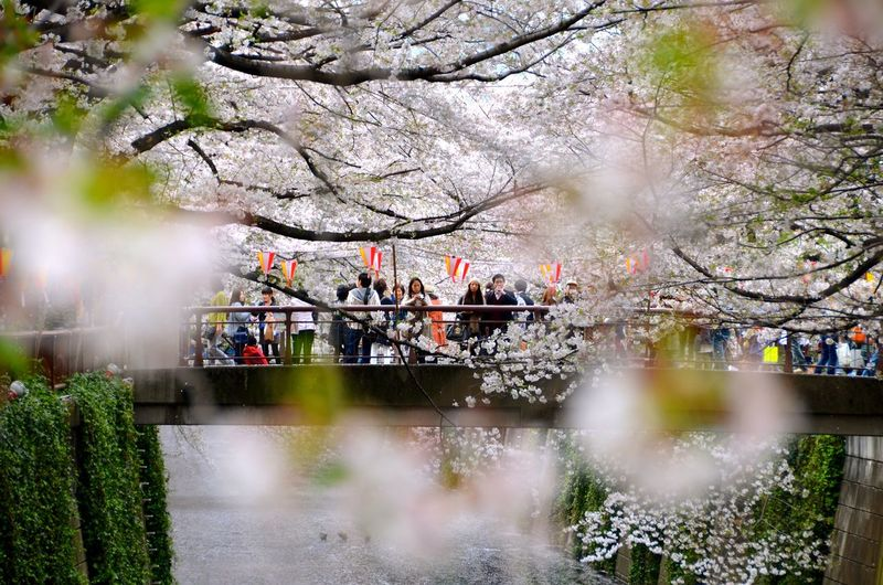 Sakura! Ultimate Japan Check This Out Hanging Out Hello World Taking Photos Enjoying Life EyeEm Gallery EyeEm Team EyemEm Best Edits Week On Eyeem Discover Your City Feel The Journey Taking Photos Tokyo,Japan Sakura