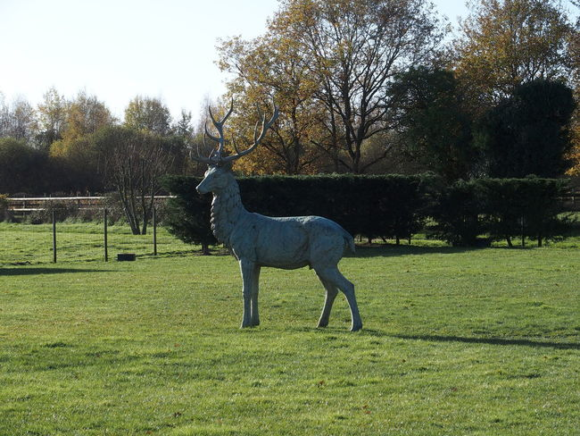 week end en Sologne Deer Iron Sculpture Sculpture Sologne