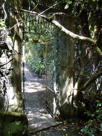 Eyeem Ireland EyeEm Nature Lover EyeEm Best Shots Garinishisland Cgk Photography