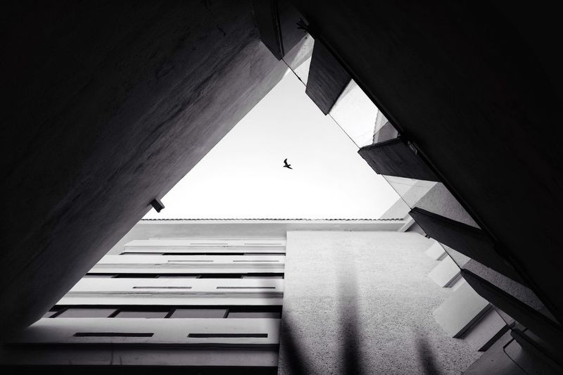 Directly Above View Of Bird Flying In City