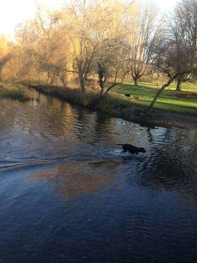 Pond Cassiobury Park Park Watford Dog Dogs
