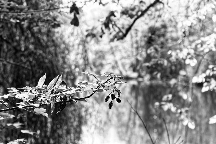 Reflection Wood