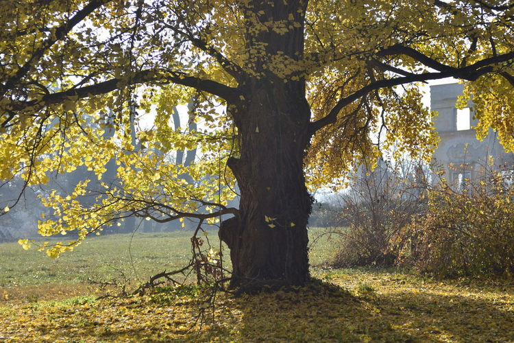 Tree Nature Growth Trunk No People Sunlight Branch Autumn Forest Landscape Change