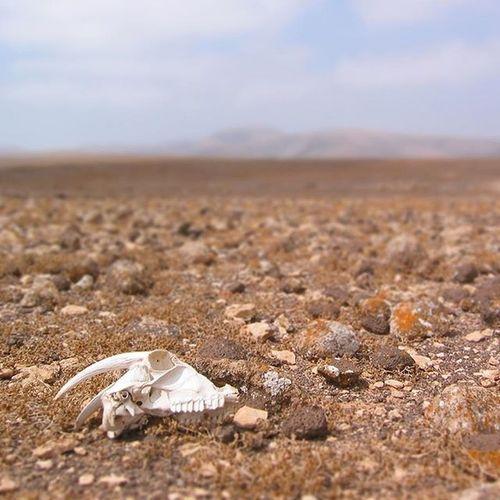 """""""Nur wer reist, kann etwas erleben."""" (Hier waren wir in Spanien unterwegs - am gefühlten Ende der Welt, aber eine lange Geschichte mit einem Mietwagen, den wir ein trockenes Flussbett hochgefahren haben :-) Skull Totenschädel Desert Lonely Deadly Deadsheep (or whatever it was)"""