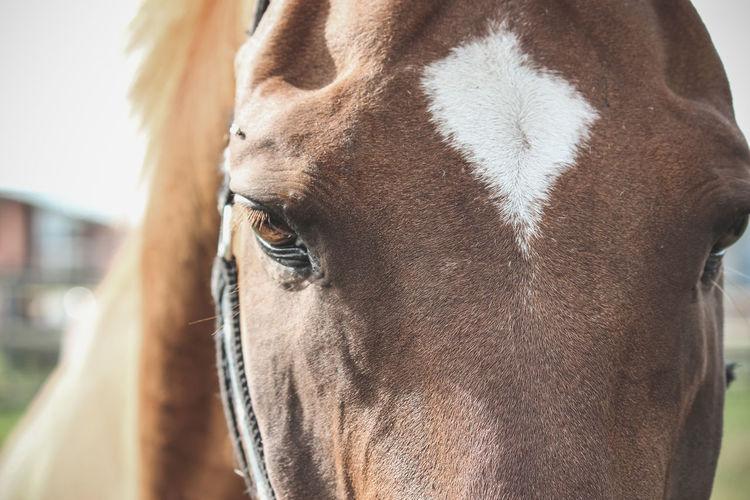 Close up of horse eyes