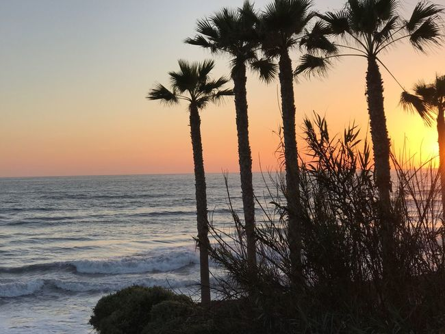 Horizon Over Water Sunset Beauty In Nature Sea Palm Tree Tree Scenics Nature Tranquil Scene Tranquility Beach No People Water Silhouette Growth Sky Outdoors Day