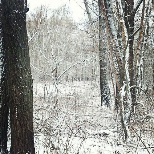 В лесу гораздо красивее чем на фото.... леснаясказка Лес сказка зима балашов Wood Forest Погода Morning
