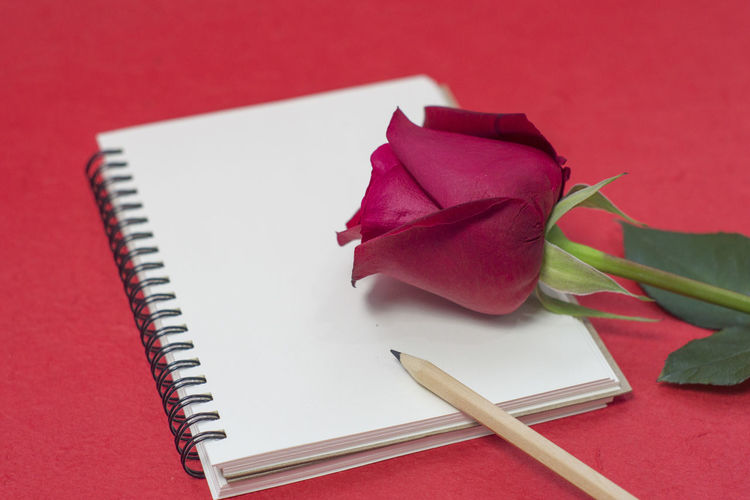 High angle view of rose with pencil on book
