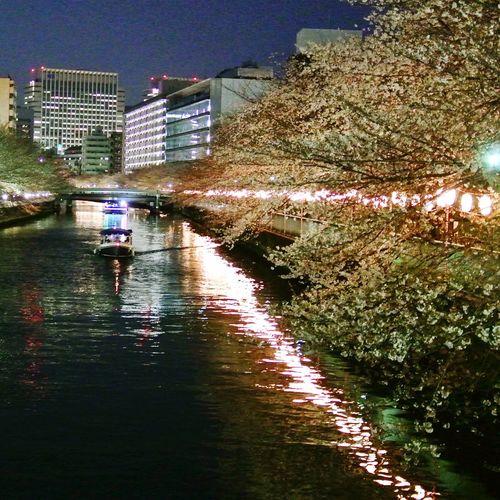 Yozakura Cherry Blossoms Cherrytreesatevening 屋形船 夜桜 門前仲町