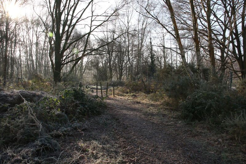 Beauty In Nature Bright Day Footpath Forest Growth Nature No People Non-urban Scene Outdoors Posts Scenics Sky Sun Surrey Countryside Track Tranquil Scene Tranquility Tree Walking Winter Morning