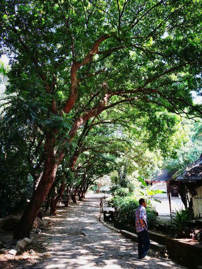 greenery Forest Nature Tree Branch Men Full Length Standing Walking Pathway Walkway Woods