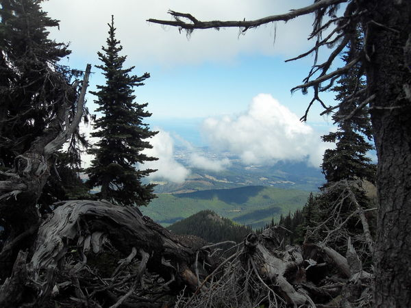 Angel's View Alpine Firs Alpine Trees Blue Mountains Mountain View Olympic National Park Olympics Strait Of Juan De Fuca Twisted Wood Alpine Landscape Beauty In Nature Mountain Scenics - Nature