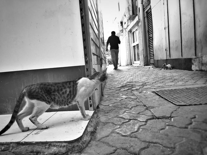 Man walking on cobblestone street