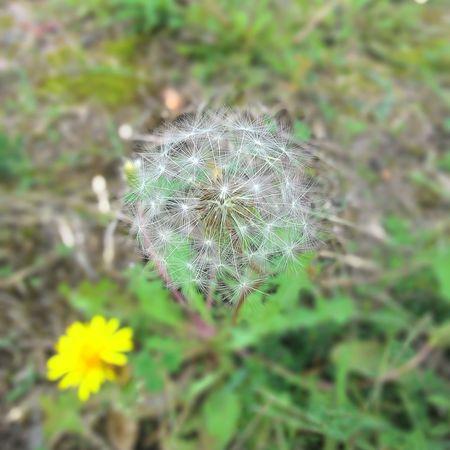 Beauty In Nature Flower Head