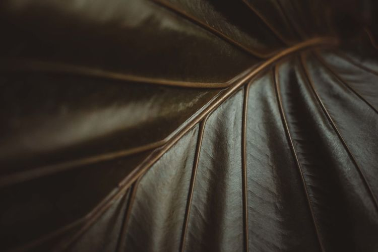 Green Color Abstract Backgrounds Brown Close-up Full Frame Leather Photography The Week On EyeEm Editor's Picks