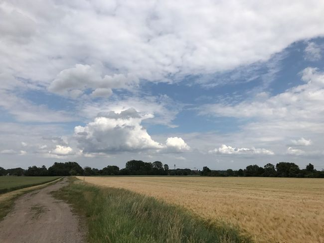 Sky And Clouds Golden Field Of Gold Landscape No People Nature Sky Field Agriculture Outdoors Day Beauty In Nature Summer Growth Agriculture Ear No Filter No Filters Or Effects