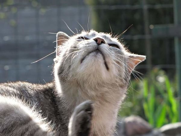 Grey One Animal Looking Up Outdoors Animals In The Wild Day Lazy Morning Lazycat Fuunymomemt Summer The City Light