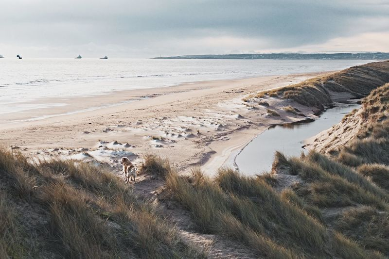 adventure is out there Dunes Scotland Beach Balmedie Beach Aberdeenshire Adventure Golden Retriever Dog Walk Landscape Sea Dramatic Sky Sand Nature Cloud - Sky Tranquility Travel Destinations Beauty In Nature Outdoors Tourism Scenics Awe