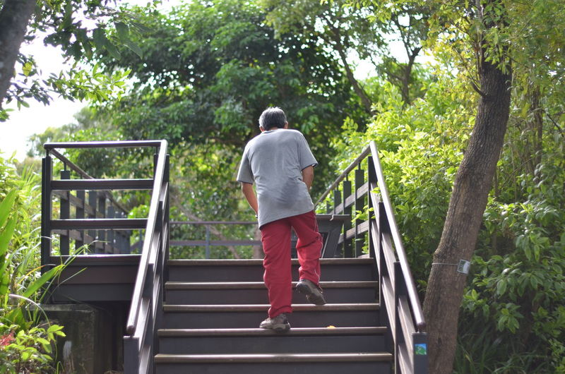 Tree Full Length Steps And Staircases Rear View Steps Staircase Standing Women Railing Human Back