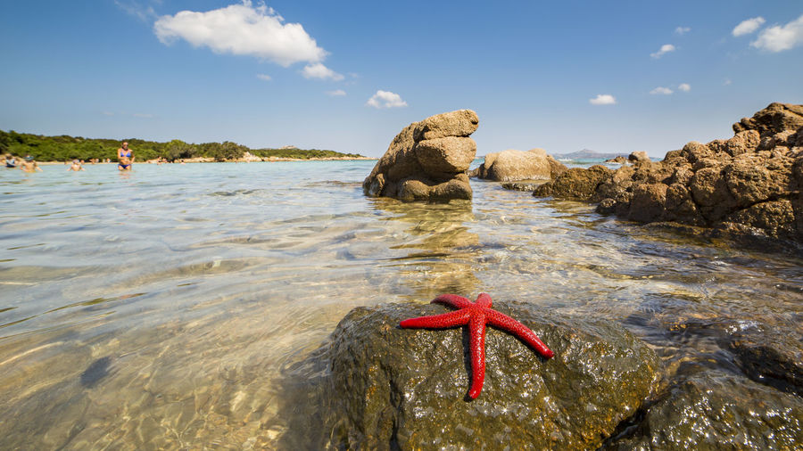 Close-up of starfish on rock in sea