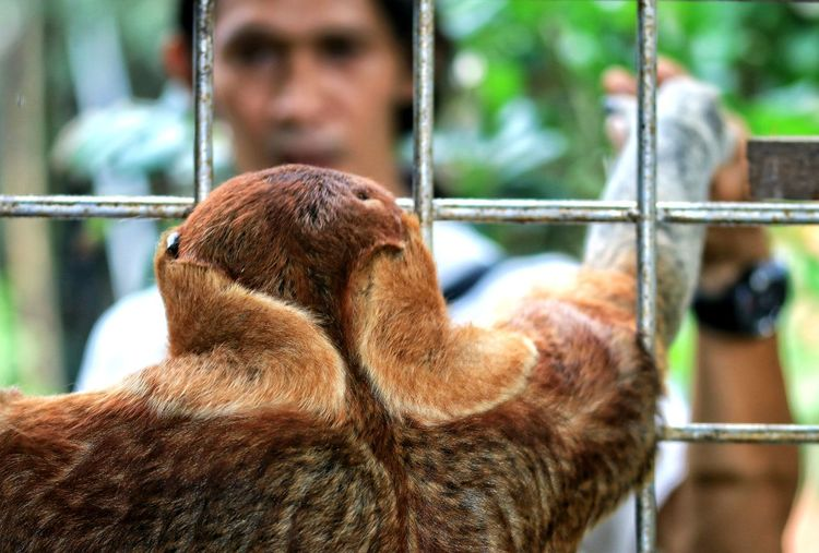 Rear view of sloth in cage at zoo