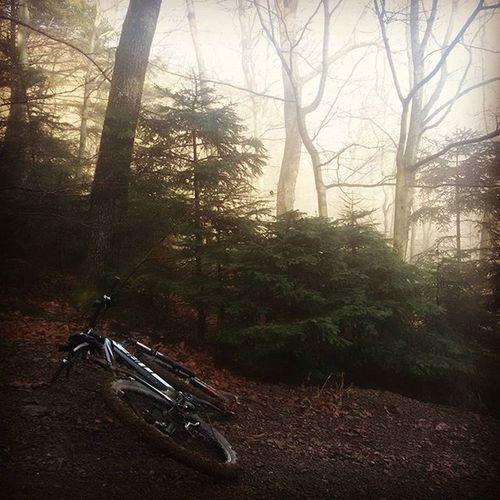 Hillclimb Forest Cubebikes