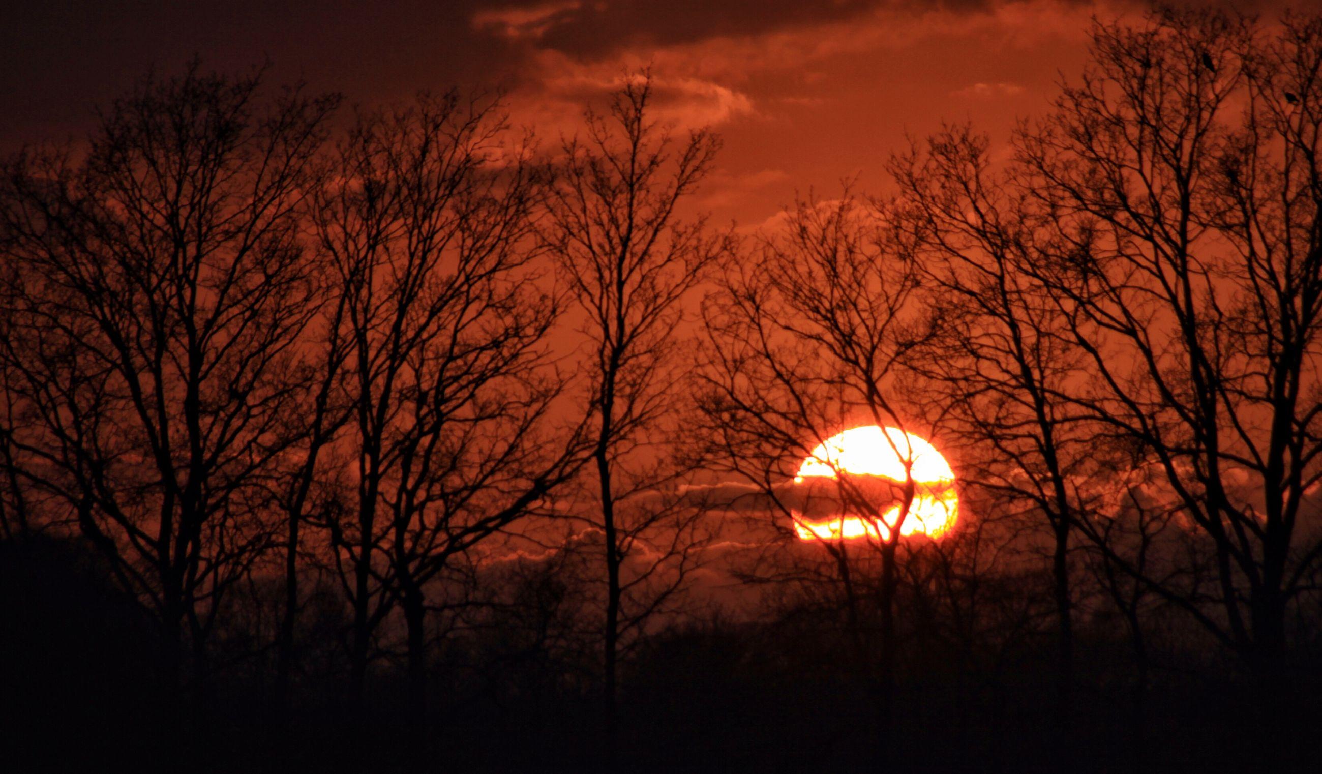 sunset, silhouette, bare tree, orange color, sky, tree, tranquility, beauty in nature, scenics, tranquil scene, cloud - sky, branch, nature, dark, idyllic, sun, dramatic sky, outdoors, landscape, dusk