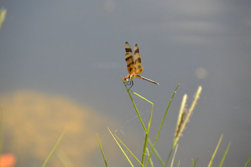 View of dragonfly on blade of grass