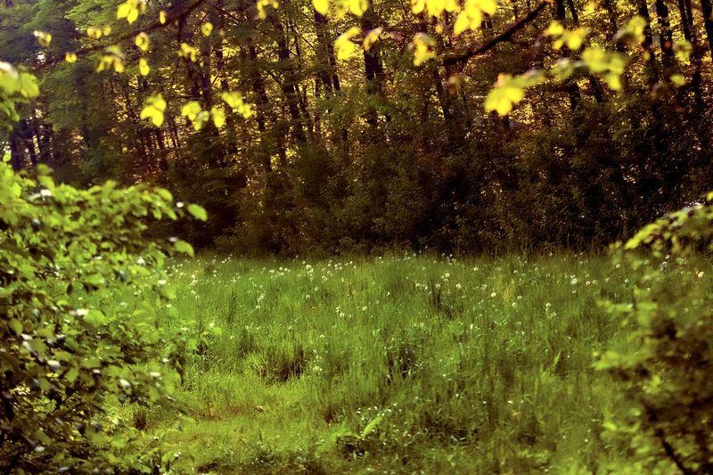 Meadows Plant