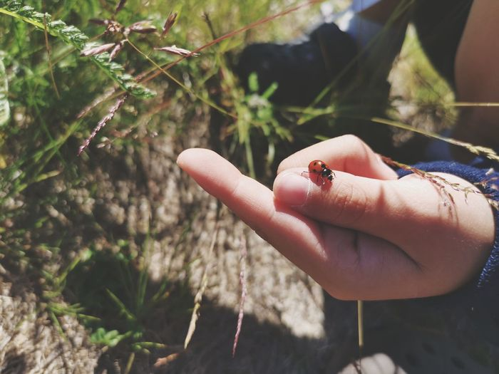 Close-up of hand holding small insect