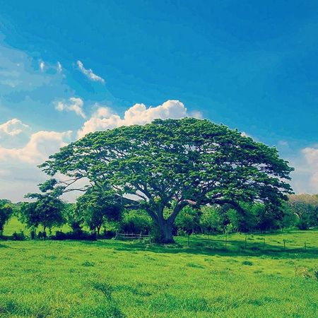 """Day 37. """"Challenges are what make life interesting and overcoming them is what makes life meaningful."""" – Joshua J. Marine 40daysofgreatness for LGG4 @lgphilippines Farmdiaries Trainee countryside countrylifestyle nature acacia landscape HaciendaBigaa CalataganBatangas"""