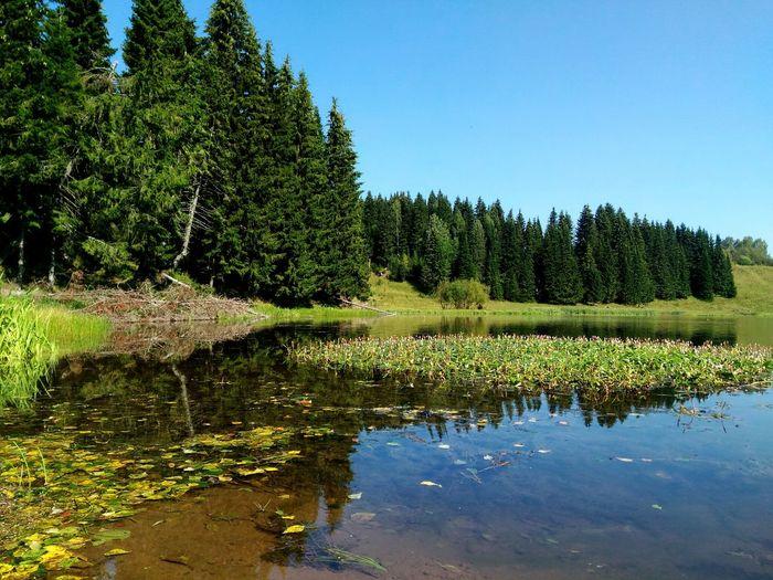 Россия природароссии Природа лес и природа пруд пермский_край крастота Colour Of Life