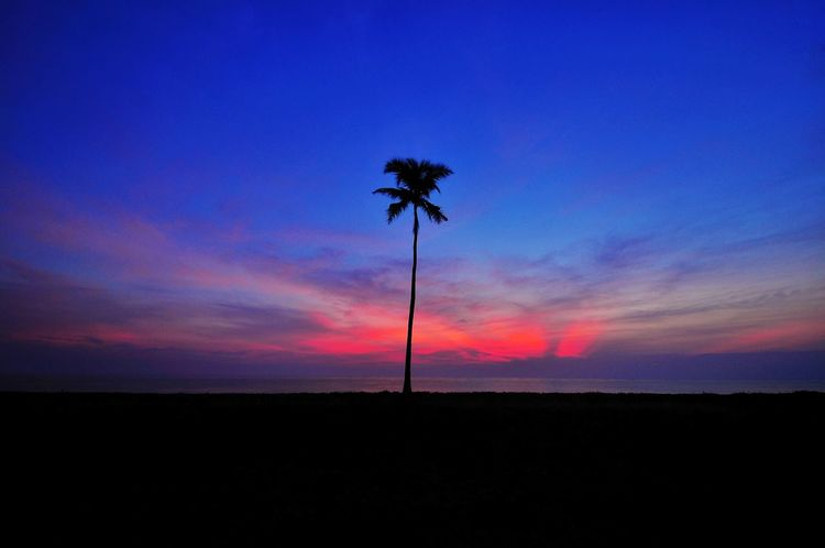 still and only one Malaysia Dungun Sunrise Sunrise_sunsets_aroundworld Sunrise_Collection Sunrise Silhouette Coconut Coconut Tree Coconut Palm Tree Coconut Trees Red Red Sky Dawn Fajr Beach Ocean Hawaii Maldives Bali Thailand One Silhouette Silhouetted Tree Sunset Tree Silhouette Blue Sky Landscape Dramatic Sky