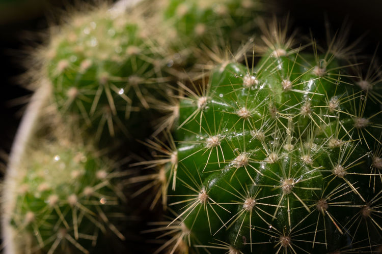 Beauty In Nature Cactus Close-up Freshness Green Color Growth Nature Outdoors Plant Spiked Thorn
