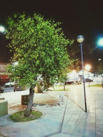 Tree night Tree City - near of my house