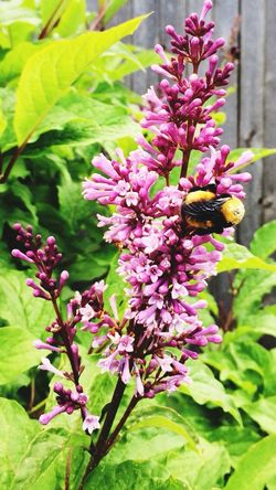 Hi Mr. Bumblebee 😃 Check This Out EyeEm Nature Lover Nature Taking Photos Enjoying Life Bugs Flowers Summer Summertime Simplicity