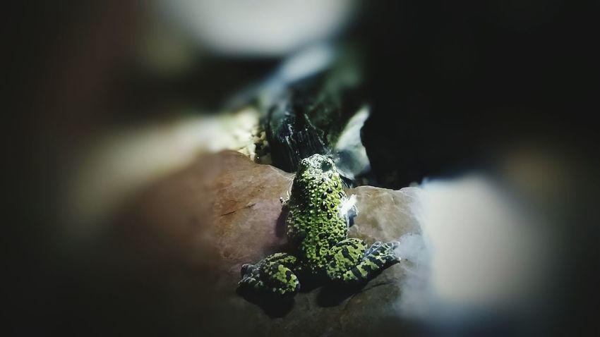 Tree Frog Frog Lens Blur