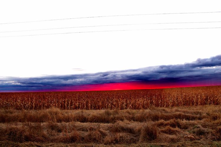 Cornfield sunset Rural Scene Agriculture Red Multi Colored Field Sky Landscape Farmland Corn - Crop Crop  Wheat Sweetcorn EyeEmNewHere