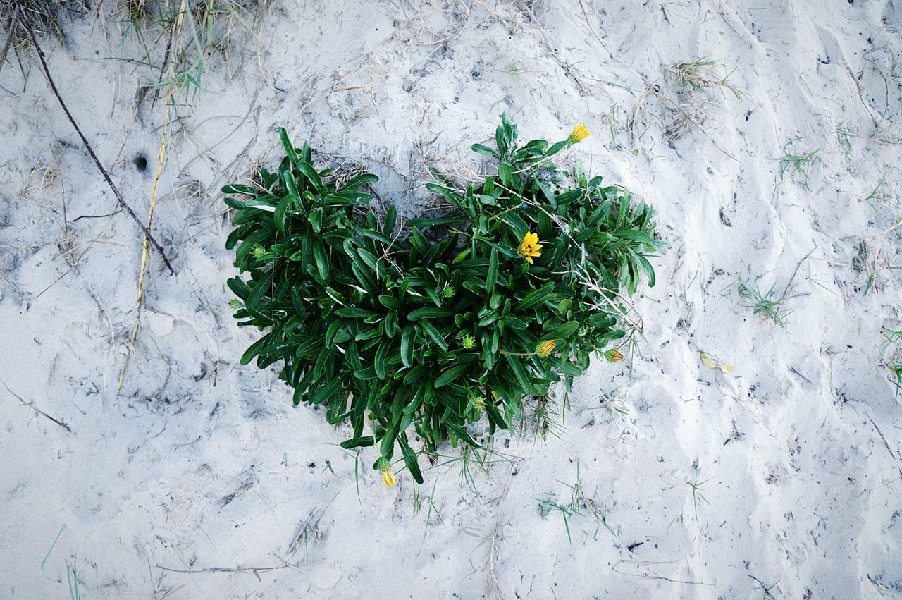 Directly Above Shot Of Plant In Heart Shape