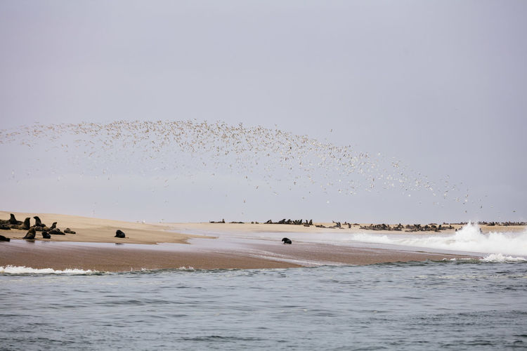 Africa Namibia Water Sea Sky Beach Motion Land Nature Animals In The Wild Beauty In Nature Sport Wave Scenics - Nature Group Of Animals Animal Themes Animal Vertebrate Animal Wildlife Day Non-urban Scene No People Flock Of Birds